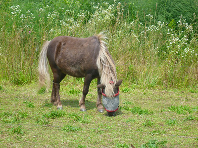 Pony in gray blinder
