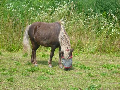 Pony in gray blinder