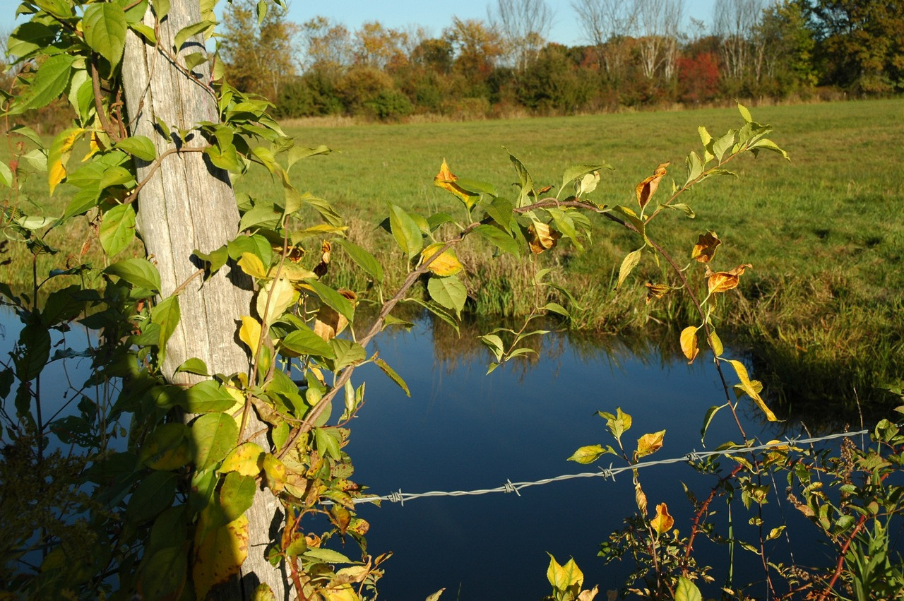 Fence and pond