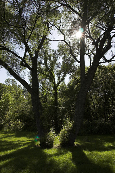 """Backlit Trees (Submitted to <a href=""""http://www.lensday.com"""">Lensday</a> for """"Sunny"""")"""