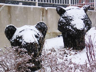 Snow-piary