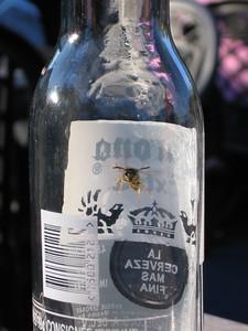 Bottled wasp