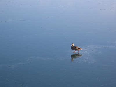 Walking on Water (I)