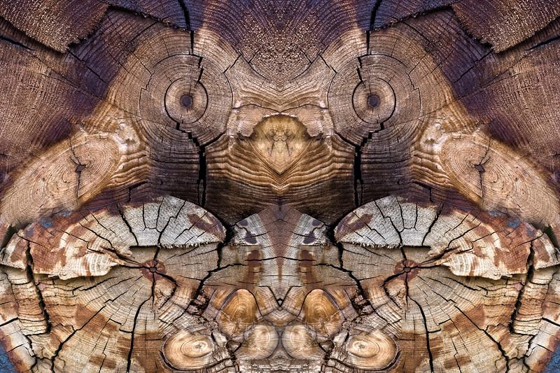 Dog-Wood Owl