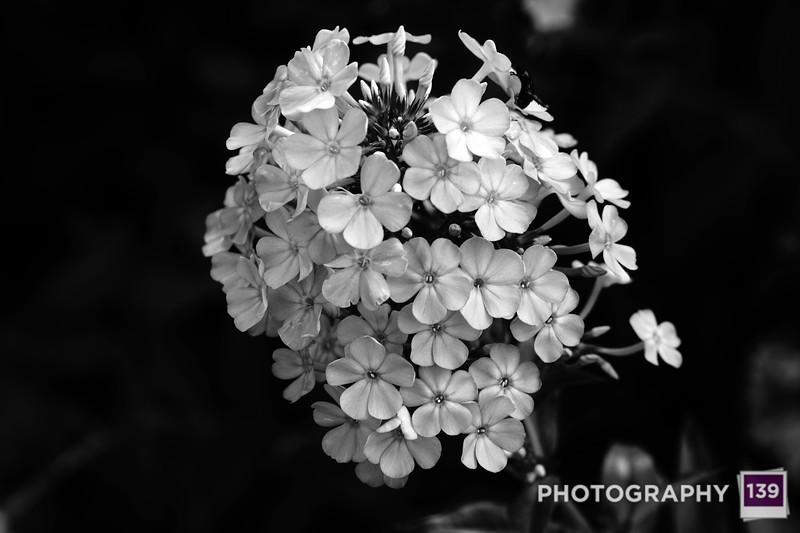 WEEKLY PHOTO CHALLENGE ALTERNATES - BLACK & WHITE