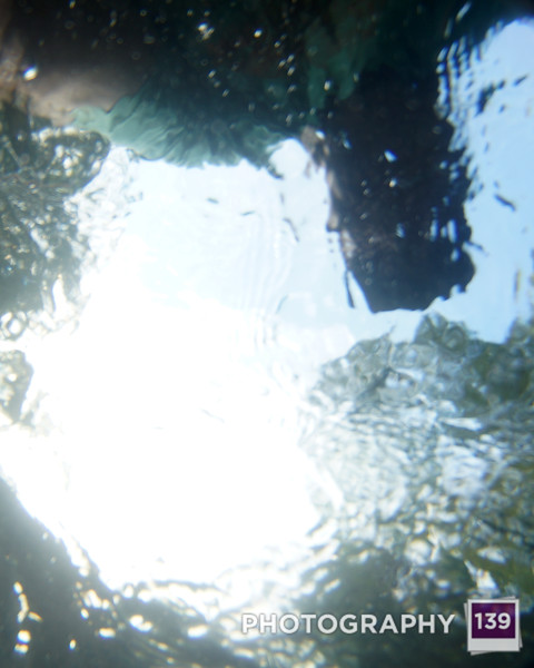 Underwater Photography in McHose Park