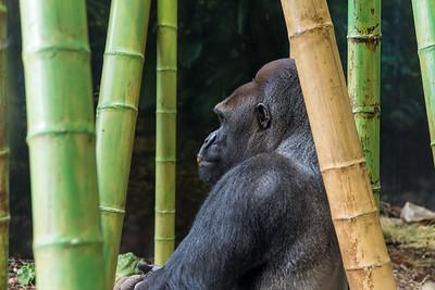Inside the Helen Brach Primate House