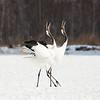Dancing Crane Pair