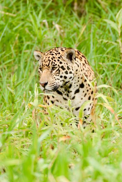 Pantanal 2013