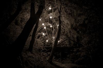 Henrik Plenge Jakobsen (DK) - Angst Tree-11228030986