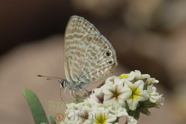 Biodiversity Group, PICT3752