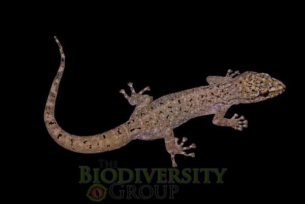 Biodiversity Group, _DSC5610-Edit