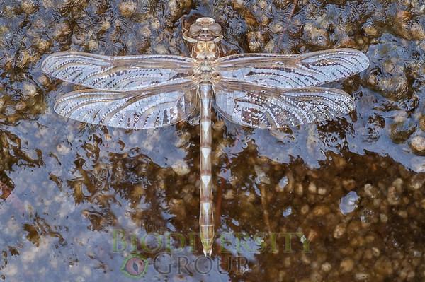 Biodiversity Group, PICT4276