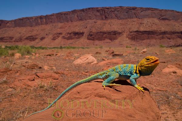 Biodiversity Group, PICT4572