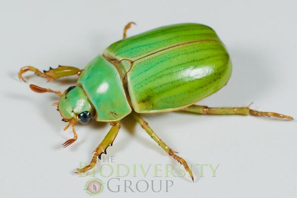 Biodiversity Group, _DSC8892