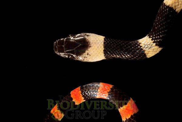 Biodiversity Group, DSC01694