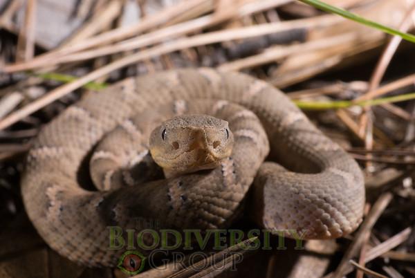 Biodiversity Group, DSC00727