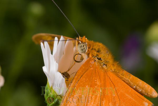 Biodiversity Group, _DSC6692