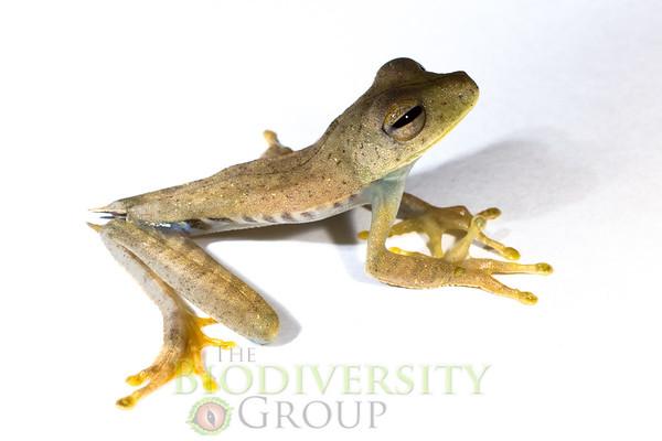 Biodiversity Group, _MG_3801