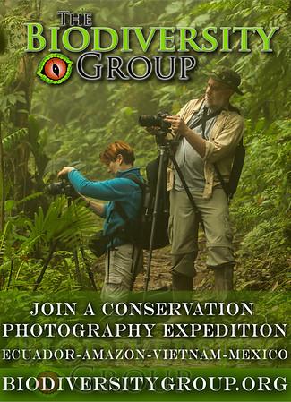 Biodiversity Group, sierra ad 4