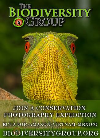 Biodiversity Group, sierra ad 3