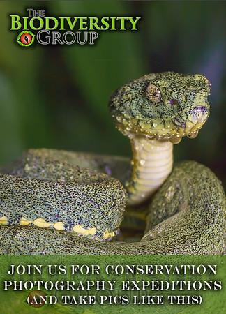 Biodiversity Group, fb 1