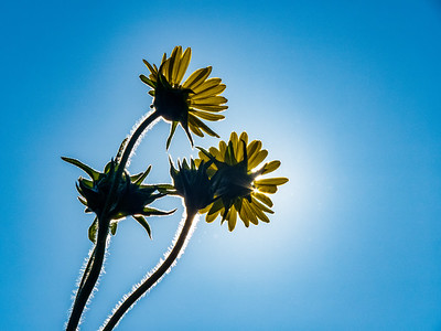7.23.2018 Sun. Flowers