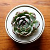 Day 182 - Such Succulence
