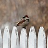 Day 471 - On the Fence