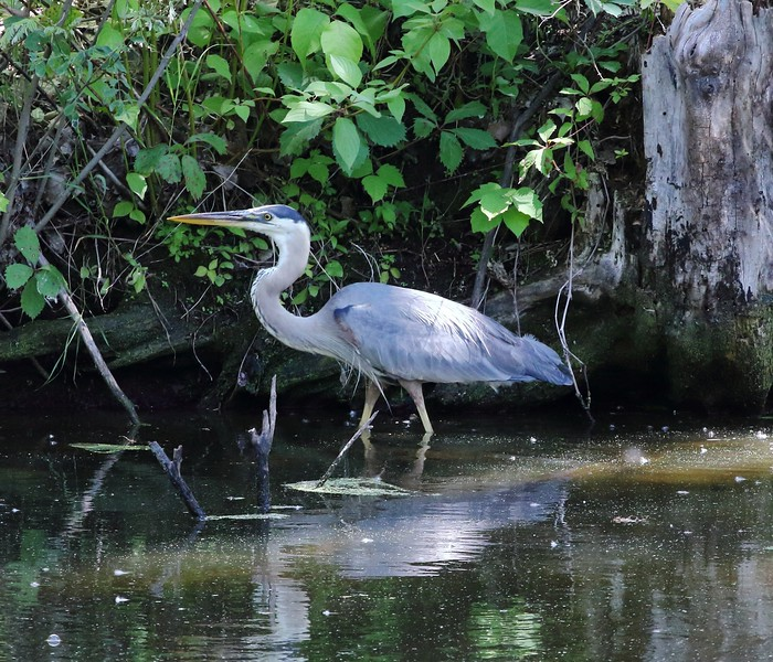 Day 550 - From Heron Out