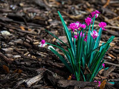 3.6.2020 Spring is Springing