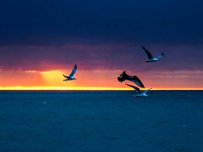 3.29.2020 The Birds