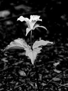 5.11.2020 Black + White