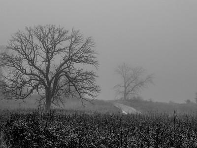 11.18.2019 Through the fog