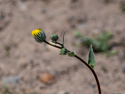 2.23.2020 New Life, Death Valley