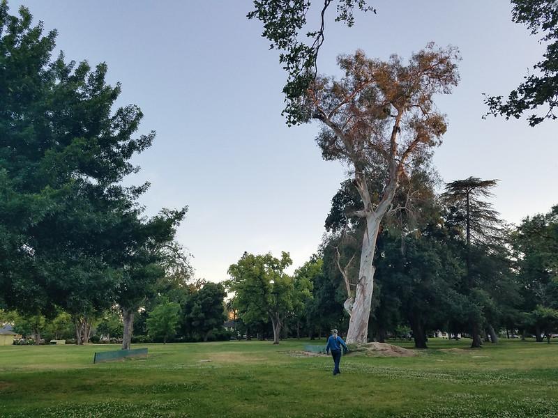 Tree. Big.