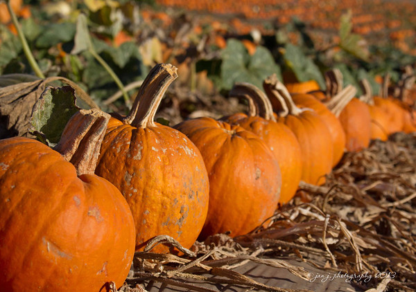 October 7 - You're never too old for the pumpkin patch...