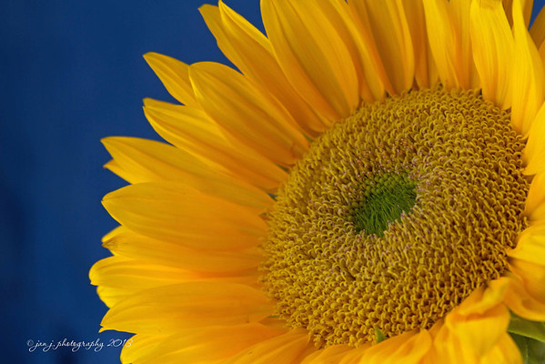 September 1 - Sunny Sunflower