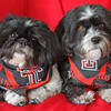 January 11 - Even our dogs Lexi & Lucy must represent Texas Tech...Go Red Raiders!
