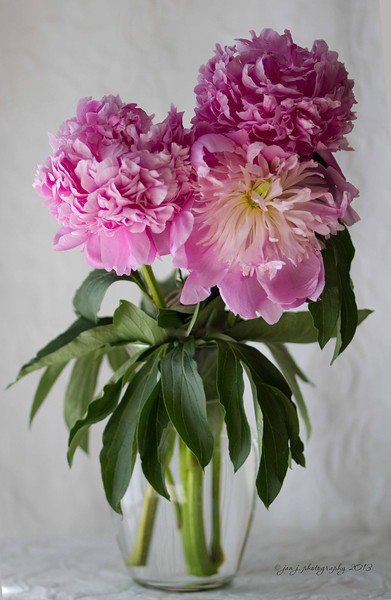 June 7 - I'm still enjoying my peonies.