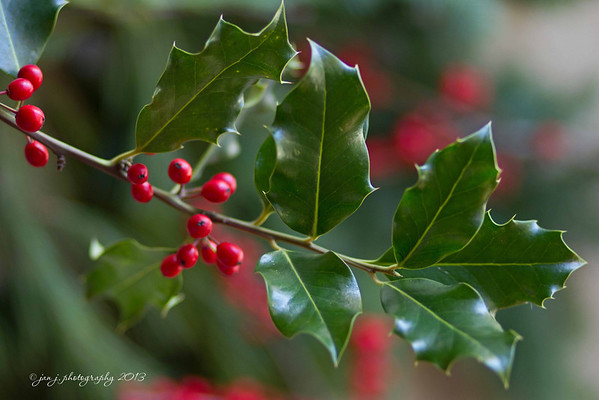 December 23 - Decking the halls with boughs of holly