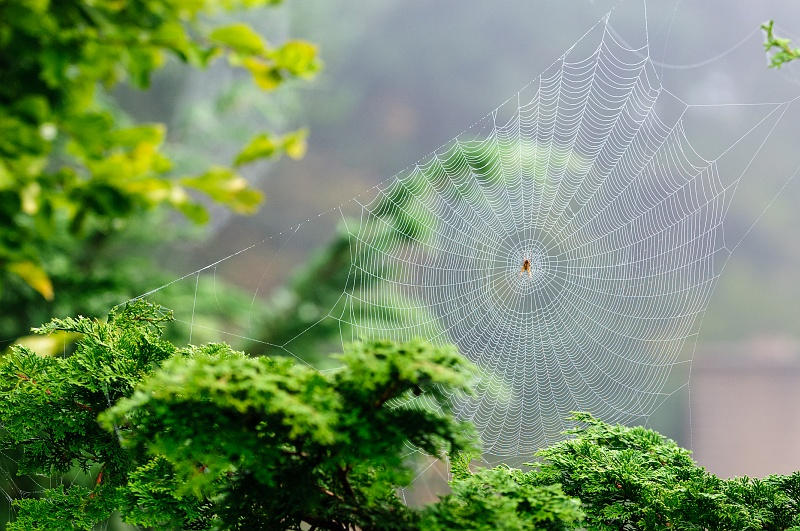14 Oct 2014: Lots of spiders out this autumn