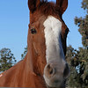 January 4 - My daughter Jennifer took us to the Serra Horse Rescue facility in Petaluma, CA where she volunteers.