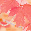 September 25 - Currently loving the colors of autumn...<br /> <br /> #CY365 - Currently Loving