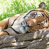 April 16 - We are pooped!  We are physically tired, mentally tired and emotionally tired...but we're ready to go.  We have appreciated all your notes, emails, texts, messages and prayers.  They have gotten us through some long hard days.<br /> <br /> San Diego Zoo 2019