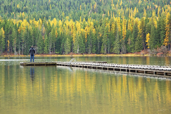 October 22 - To be honest, this California girl had heard of Tamarack trees but didn't know they changed colors...but I know now<br /> <br /> Round Lake<br /> Sagle, ID
