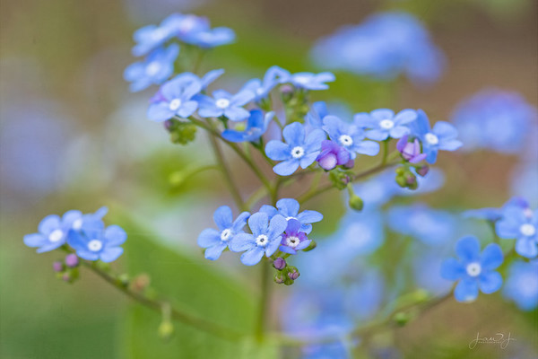 May 4 - Some Forget Me Nots along the way...