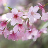 March 18 - Cherry Blossom season is the best...