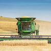 August 16 - We headed back into the Palouse today to hunt down the farmers cutting their wheat. I could have watched all day. This young man did an awesome job maneuvering that huge combine around the field - I was in awe. I think I need a book on crop identification. I'm pretty good at wheat and alfalfa, but beyond that this city girl is clueless.<br /> <br /> #CY365 - On the Hunt