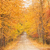 November 1 - Beginning 30 Days of Thankfulness. I am incredibly thankful this year for the seasons. I am totally in awe of fall...it's been like Christmas for my eyes.<br /> <br /> #CY365 - Simple Pleasures